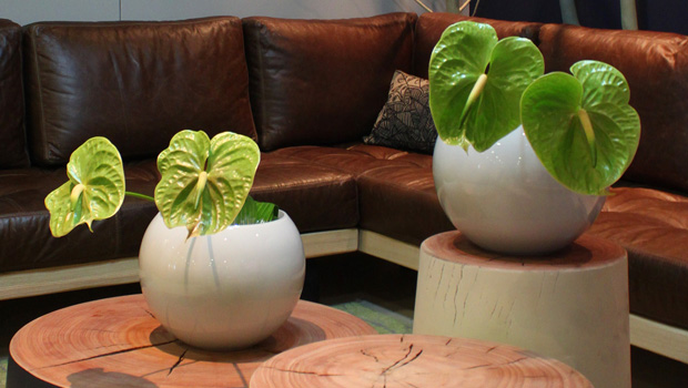 LATERAL CONCEPTS, GETTING REAL AND DO-GOOD DESIGN FLOURISH AT DECOREX CAPE TOWN