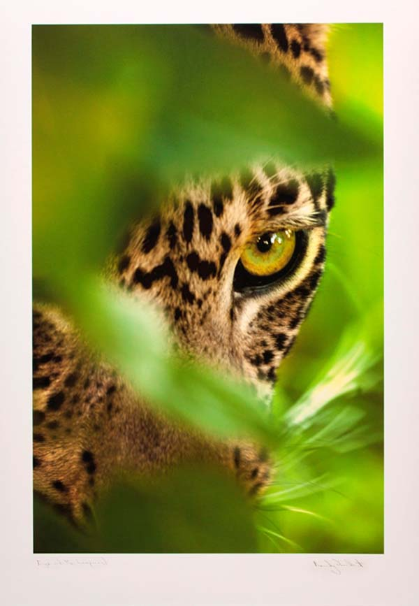 Eye of the Leopard - 5013 (small)