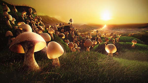 The Mushrooms are Coming